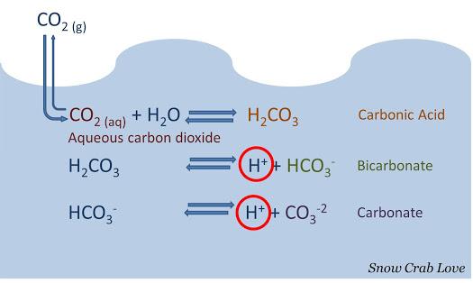 Ocean acidification feedback causes increased warming   Damn the ...